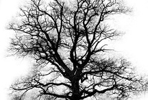 trees/alberi