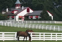 My Old Kentucky Home / by Suzanne Jolly