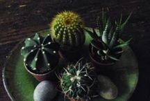 ... garden & mini garden ...