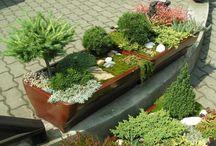 Zahradní koryta, nádoby..
