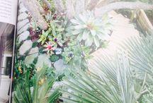 Sub tropical garden / Garden