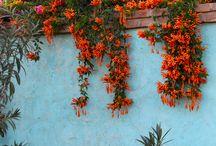 painted garden walls