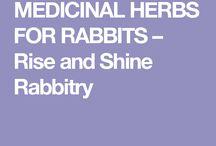 bunny herbs