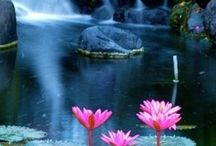 Bali endonezya