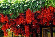 plantas pra casa e jardim