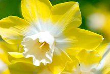 ЖёлтоЕ ~   Yellow and orange mood / ... Детство — это когда желтый цвет — ярко-желтый, деревья-живые великаны, а до луны можно дотронуться рукой, когда среди друзей есть невидимый мальчик, а под кроватью явно кто-то живет