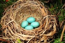 robin's egg blue / by ms art