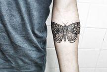 butterfly / moth