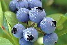 Dessert - Blueberry  / by happytobeme