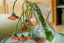 életre kelti a virágot