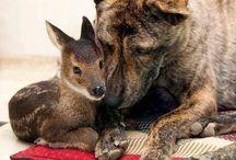 Cute animal photo's