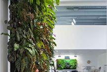 Green Walls - Designing Ideas