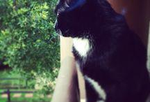 My cat, Jackson / Photos of my beloved cat, Jackson