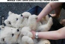 Cuteness kills