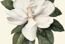 Flores art