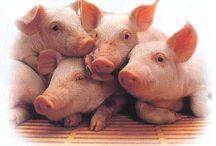 pigs / by Patti Stith