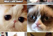 Cat faces