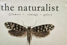 ☆The Naturalist☆