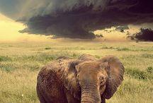elefanter ♡♡