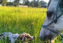 Horses / by Nikki Castille