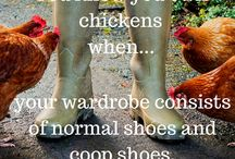 Backyard Poultry Quote Series / Check out all the fun quotes we've come up with to describe what life is like raising poultry in your backyard.