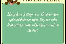 Fact-o-Pedia / Facts about your pet