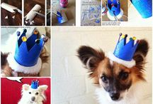 coronitas para perros