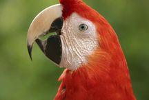Large Parrots, My Passion