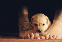 So Cute <33 / by Lisa Montgomery