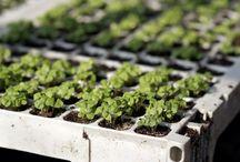 Sianie nasion / W jednej torebce nasion kryje się potencjał nawet 300 roślin. Jeśli mamy spory teren, który z roku na rok wciąż świeci pustkami – nic tylko siać.