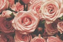 Roses and pretty flowery things