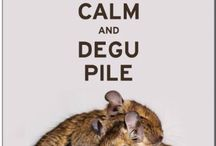 degu love