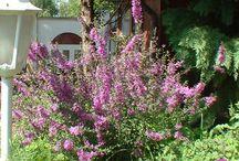 Virágok, kertek