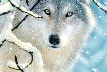 farkas rajzolás