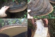 Funghi che degradano il legno