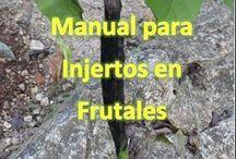 ingertos