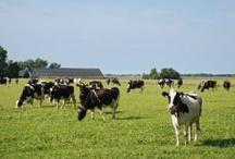 Gemeenschappelijk Landbouwbeleid #glb