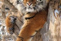 Tigrisek 2