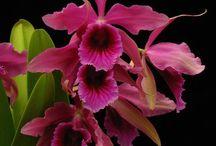 Orquids&Roses