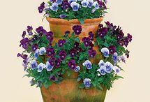 Arreglos plantas / Plantas decorativas