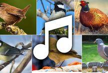 linnutjakevät