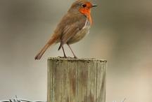 schilderen vogels