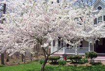 Bütün Dünya Prunus olsa Keşke :)