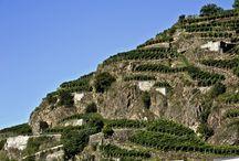 Natura & Paesaggi della Valtellina / by Hotel Vedig