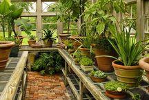 Homemade Greenhouses