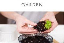 Bitkiler bahçe