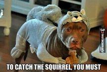 Funny stuff!:)