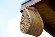 Bee Buzz / by Elizabeth Foss