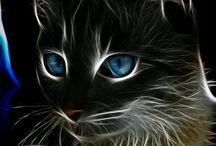 quadros de gatos