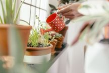 Indoor plants that purify